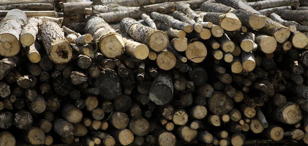 Skogsindustrins gamla avfall – dold klimatbomb